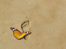 Save earth and nature, butterfly on footprint. An orange viceroy butterfly sits on a footprint on the sand. The image stands for walking with nature, helping Royalty Free Stock Images