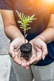 Save earth save life by plant the tree,. Environment concept royalty free stock photo