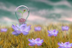 Save energy concept plant on bulb , bug plant pink flower. Save eneegy concept ecology eco friends feeling nature meaning quotes quote day green grass cloud stock photography