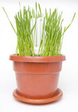 Save energy light bulb concept. Energy saving light bulb in grass concept Stock Image