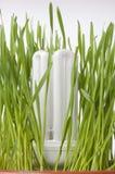 Save energy light bulb concept. Energy saving light bulb in grass concept Royalty Free Stock Photos