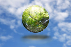 Save forest for better environment. Stock Image