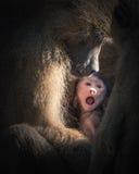 Save małpiego dziecka obraz royalty free