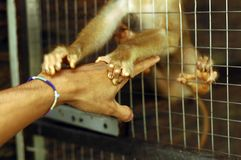 Save Me!. A baby monkey grabbing hand. Please be kind to all creatures Royalty Free Stock Photo
