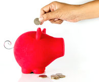 Save money with piggy bank Royalty Free Stock Image