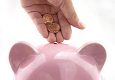 Save money. Piggy bank with some golden coins in hand Stock Photos
