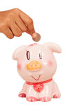 Save money with pink piggy bank Stock Images