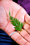 Save nature. Small green leaf on male's hand Stock Images