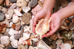 Save nature. Young girl hold in hands sea shell Royalty Free Stock Images