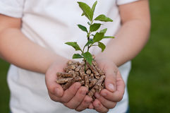 Save the Nature. Biomass in child's hands- stock photo stock image