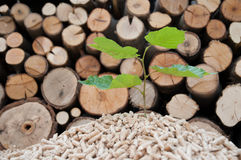 Save the Nature. Young tree comes out of heap of pellets Royalty Free Stock Images