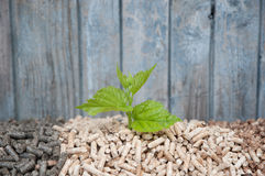 Save the Nature. Young tree growing out of heap of biomass Royalty Free Stock Photo