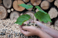 Save the Nature. Young tree growing out of heap of biomass Royalty Free Stock Images