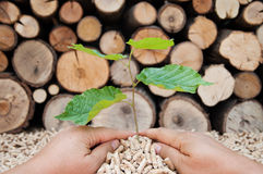 Save the Nature. Young tree growing out of heap of biomass in hands- stock photo Stock Image