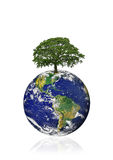 Save The Oak Trees. Planet earth featuring the American continents with an old oak tree in the position of north, over white background Stock Image