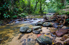 Save our rain forest. A stream that runs inside a tropical forest stock photos
