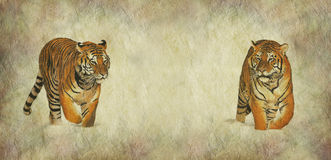 Save our Tigers Campaign Banner. Rustic parchment effect wide poster banner with two tigers strolling forwards, one on the left, one on the right and a large Royalty Free Stock Images