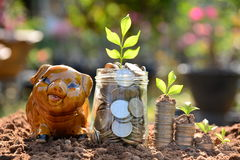 Save pieniądze z prosiątko bankiem i broguje monetę dla rosnąć twój busin fotografia royalty free