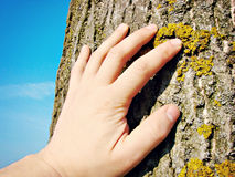 Save the planet. Hand on a tree Royalty Free Stock Photos