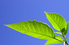 Save the planet. Image of a green leaves royalty free stock photography