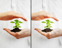 Save the planet - young plant Stock Images
