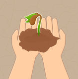 Save plants. Saving seeds from a barren Stock Images