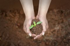 Save plants, save earth concept. With soil in the hands and plants on it stock photography