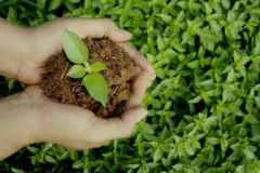 Save plants, save earth concept. With soil in the hands and plants on it royalty free stock photos