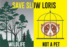 Save Slow Loris Poster Stock Photography