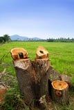 Save The Nature Stock Photos