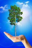 Save tree Stock Photo