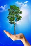 Save tree Stock Photo