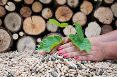 Save the trees. Young tree growing out of heap of biomass in hands- stock photo royalty free stock photos