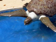 Save the turtles Stock Photography