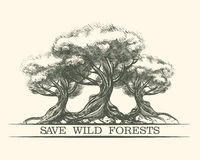 Save Wild Forests Stock Photography