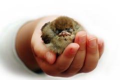 Saved sparrow Stock Image