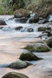 Savegre河的原始水 哥斯达黎加 免版税图库摄影