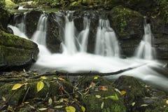 Savegre flod, San Gerardo de Dota, Costa Rica Royaltyfria Bilder