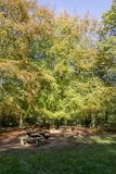 Savernake Forest - England`s larger forest. Wiltshire, United Kingdom royalty free stock images