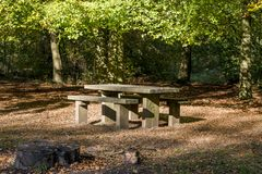 Savernake Forest - England`s larger forest. Wiltshire, United Kingdom royalty free stock photos