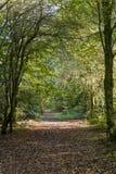Savernake Forest - England`s larger forest. Wiltshire, United Kingdom stock photo