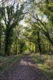 Savernake Forest - England`s larger forest. Wiltshire, United Kingdom stock photos