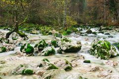 Savica wild river with trees, stones and a lot of moss, Triglav. Ski park, Slovenia Stock Photos