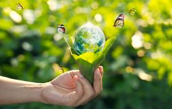 Saving energy concept, Earth day. Hand holding earth in light bulb against nature on green leaves with butterflies on green park background. Save the earth and Stock Photography