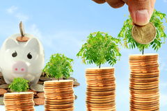Saving and growing money concept idea Stock Image