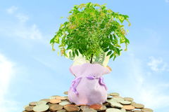 Saving and growing money concept idea Stock Photos