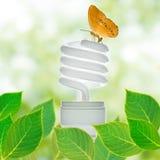 Saving lamp. Energy saving lamp green concept royalty free stock image