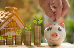 Saving money concept and hand putting money coin into piggy bank Stock Image