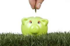 Saving money on a piggy-bank Stock Image