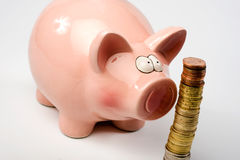 Saving pig Stock Photography